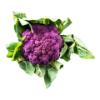 Paarse bloemkool
