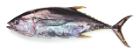 Tonijn (Yellow Fin) heel met kop, 8-20 kg