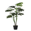 Monstera in pot 100 x 70 cm, groen